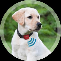 Movetrack App für Ihren Hund
