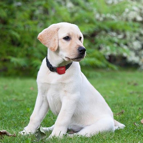 Alcatel Combi Protect Hund