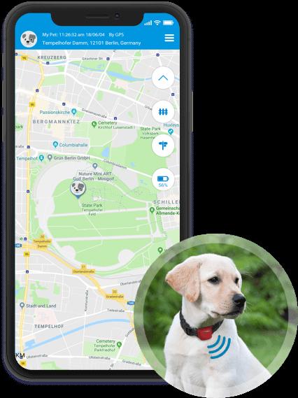 GPS für Hunde: Tracking in Echtzeit