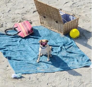 Samsung Smartphone 10x Zoom - Hund mit Sonnebrille am Strand